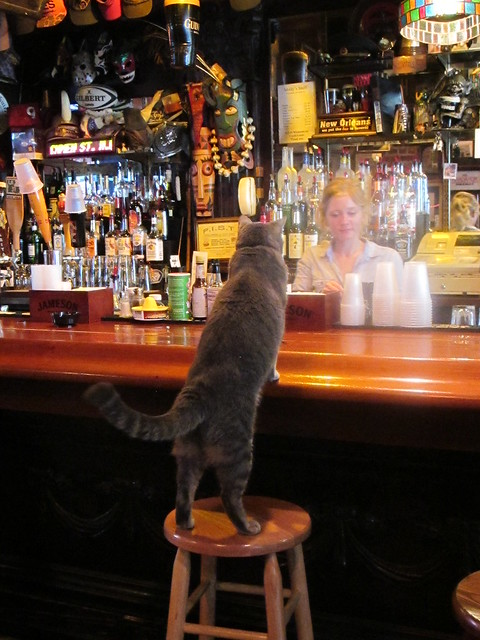 Bar Cat - New Orleans