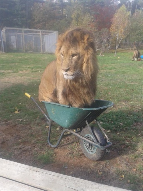 IF I FITS I SIT
